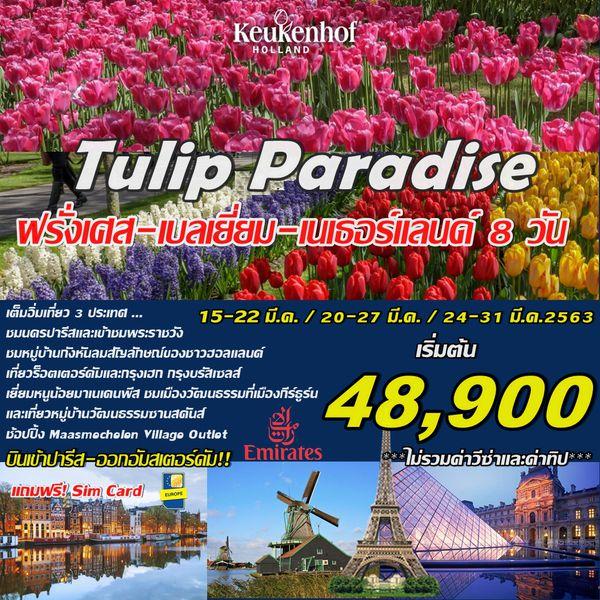 HAAPY TULIP PARADISE HVG-EK8-CDGAMS ทัวร์ยุโรป ฝรั่งเศล เบลเยี่ยม เนเธอร์แลนด์ (เทศกาลดอกไม้) 8วัน 5คืน